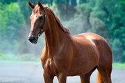 Продажа спортивной лошади