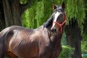 Продам спортивную лошадь