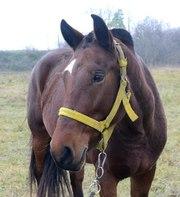Помогите найти лошадь